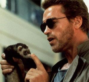Arnold Schwarzenegger Ferret