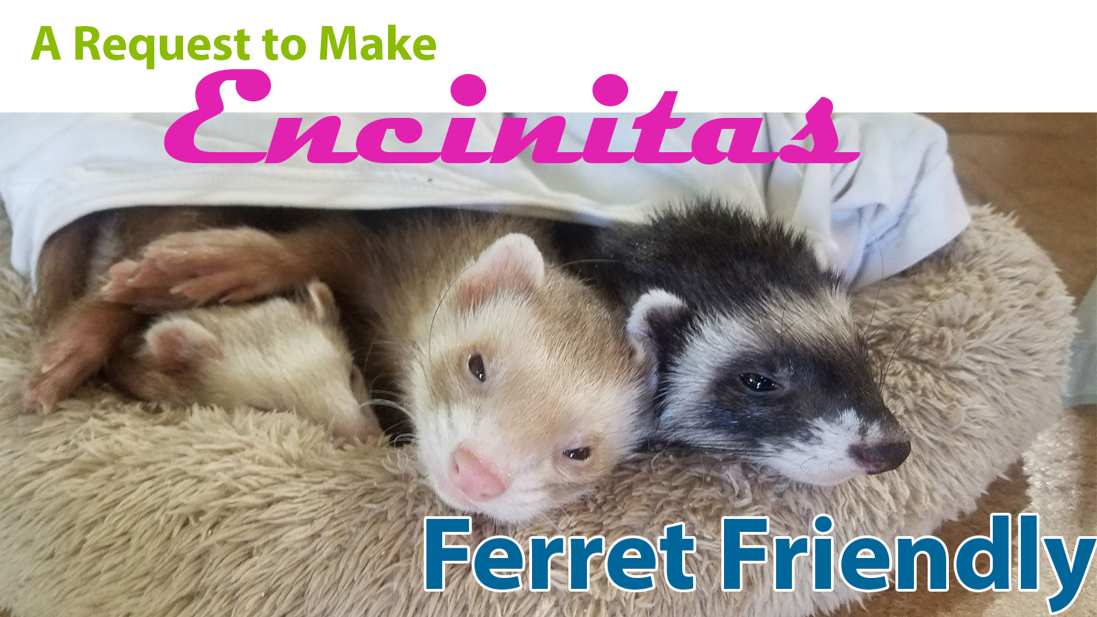 Asking Encinitas to be a Ferret Friendly City