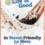 Life is good in ferret friendly La Mesa