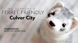 Make Culver City a Ferret Friendly City